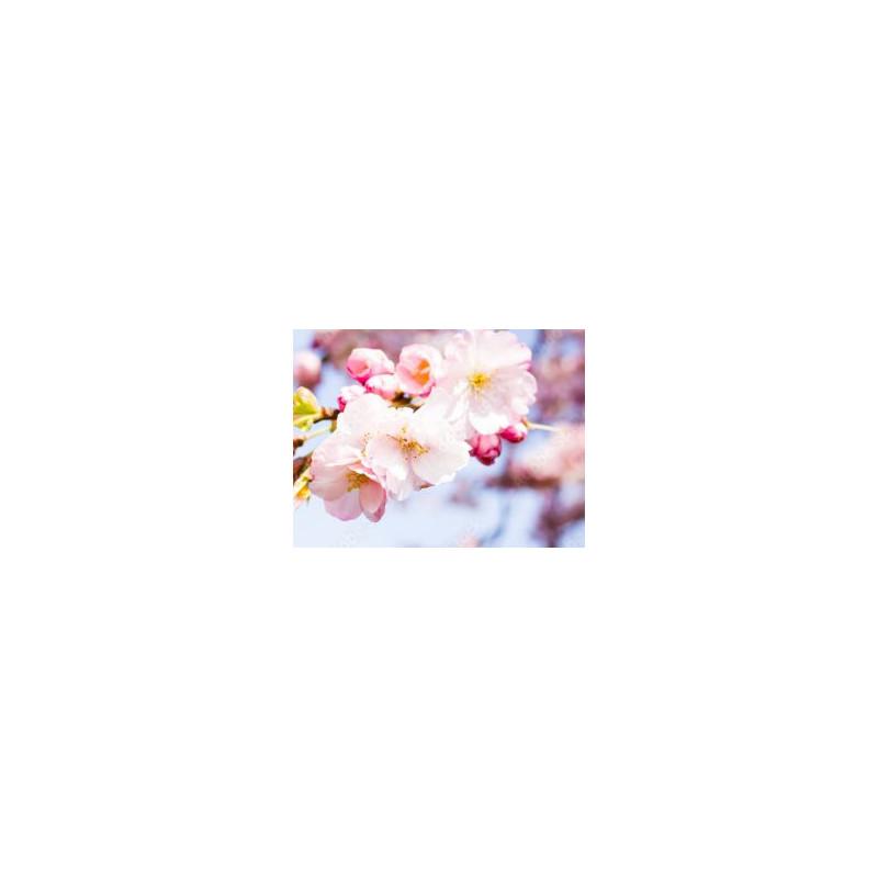 Ramki dla dziewczynek 2 117 cm x 76 cm