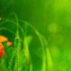 Zestaw naklejek - Alfabet angielski 180 cm x 95 cm
