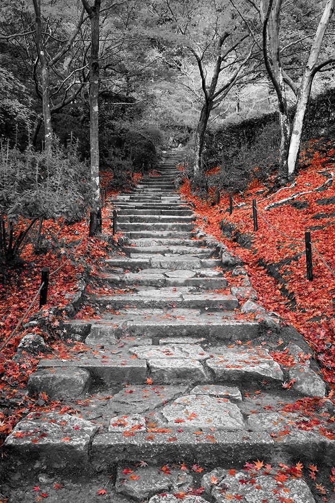 FototapetaFotografia czarno-biała - schody w jesiennym lesie