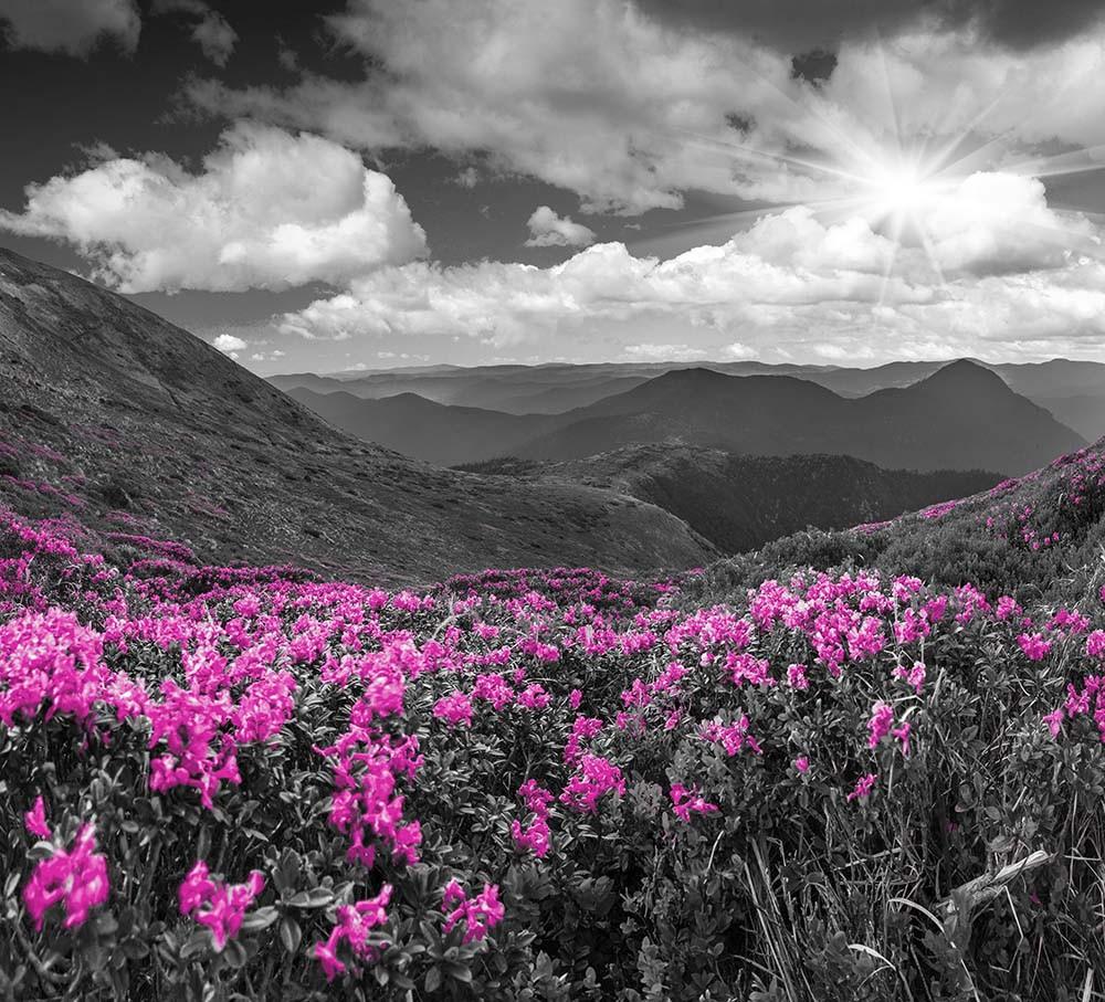 FototapetaFotografia czarno-biała z różową łaką w górach