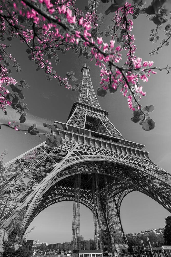 FototapetaFotografia czarno-biała z wieżą Eiffla i kwitnącym różowym drzewem