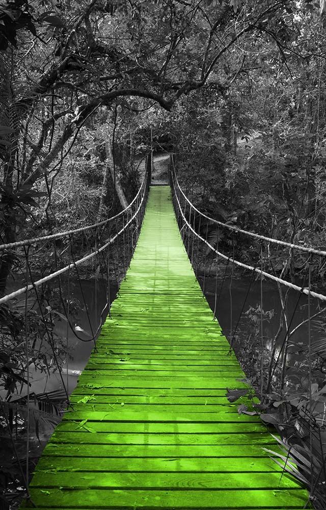Fototapeta Czarno białe z kolorem Fotografia czarno-biała z zielonym mostem w dżungli
