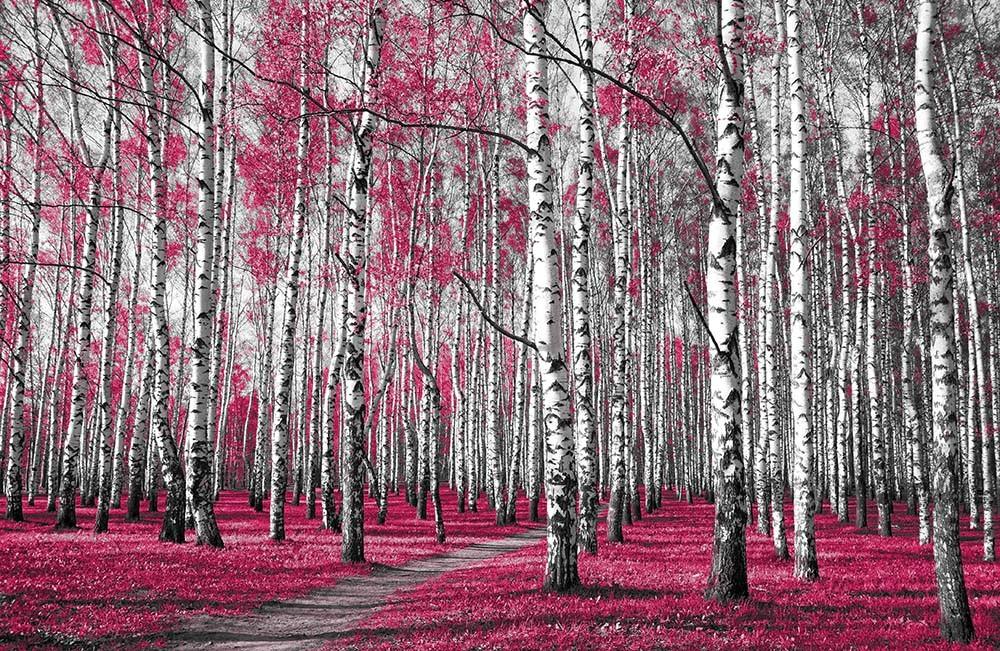 Fototapeta Fotografia czarno-biała z różowymi akcentem - Las brzozowy
