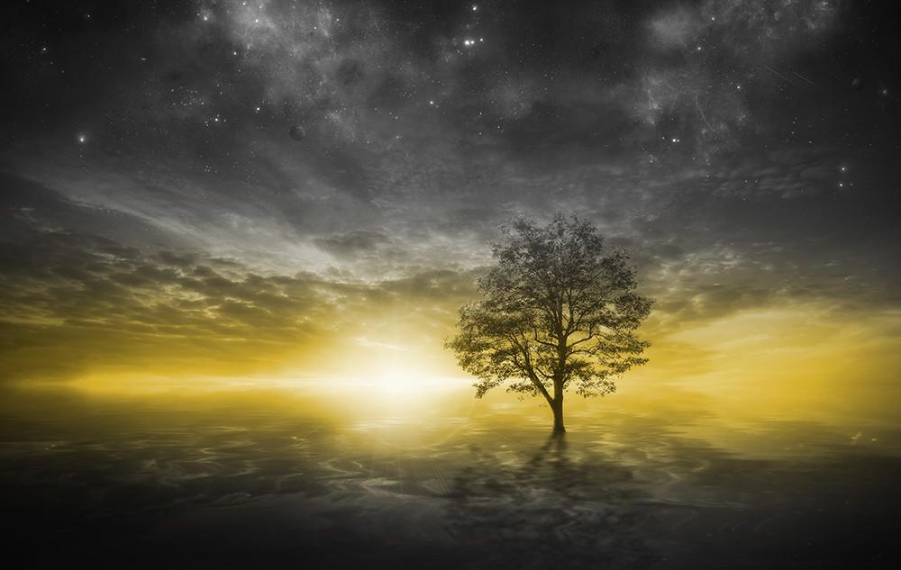 Fototapeta Fotografia czarno-biała z żółtym akcentem - Drzewo na jeziorze