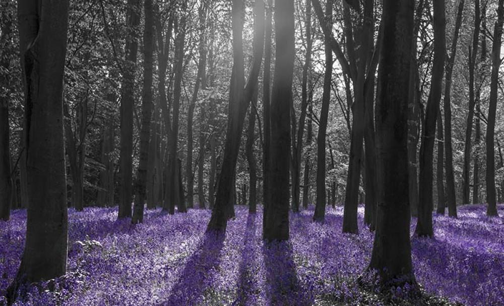 FototapetaFotografia czarno-biała z fioletowym akcentem - Łąka w lesie