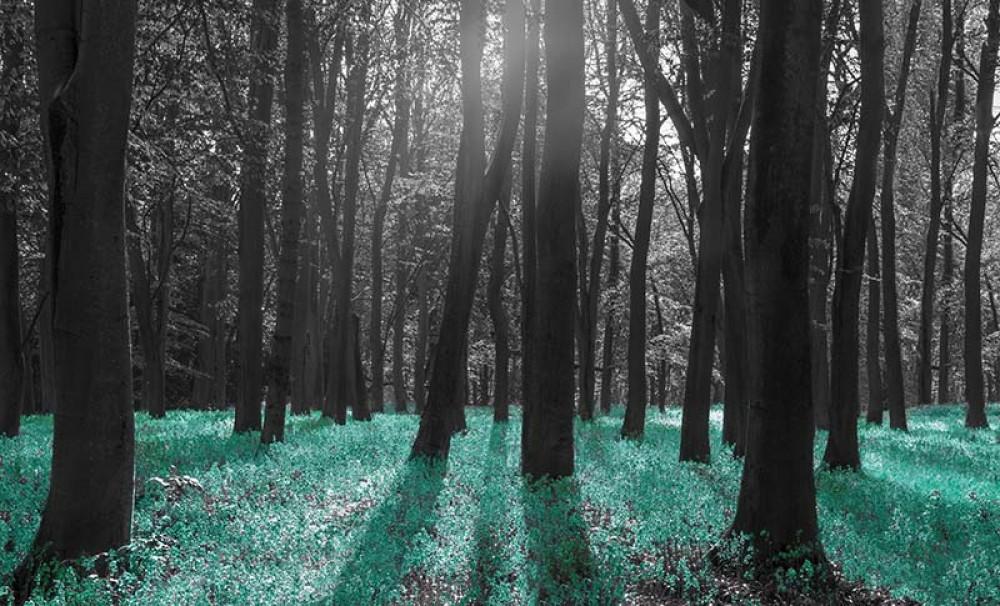 FototapetaFotografia czarno-biała z turkusowym akcentem - Łąka w lesie