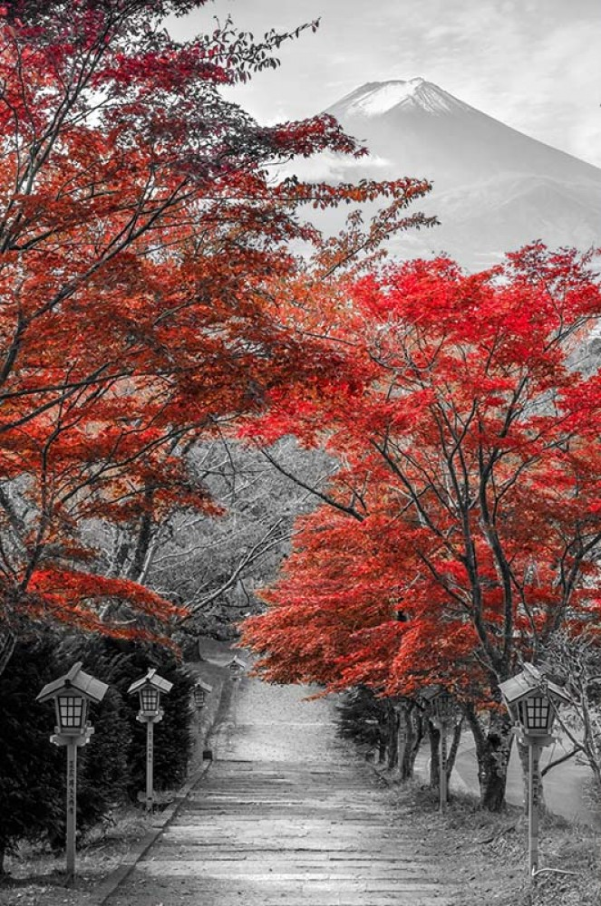 FototapetaFotografia czarno-biała z czerwonym akcentem - Góra Fuji