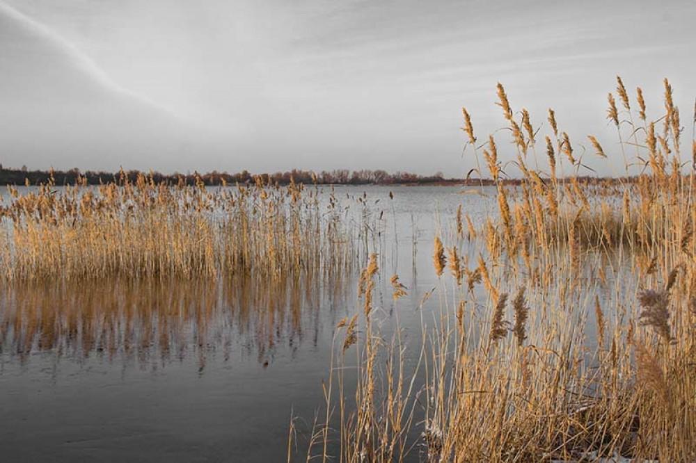 FototapetaFotografia czarno-biała z kolorowym akcentem - Trzcina na jeziorze