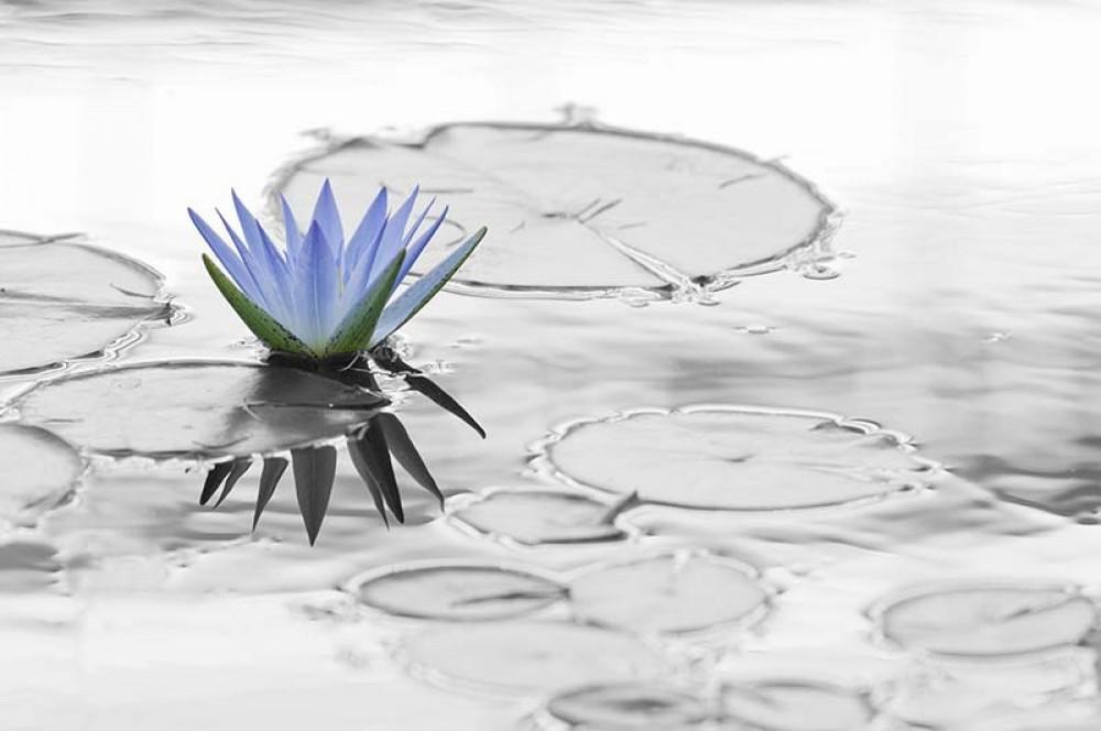 FototapetaFotografia czarno-biała z kolorowym akcentem - lilia
