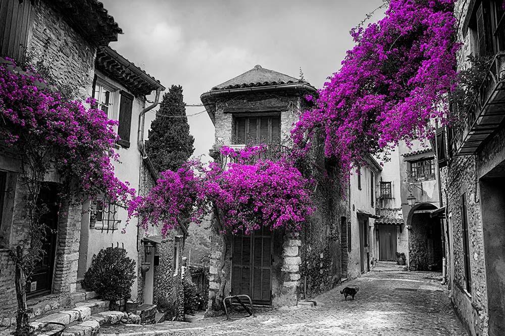 Fototapeta Fotografia czarno-biała z fioletowymi akcentami - Miasteczko na Prowansji