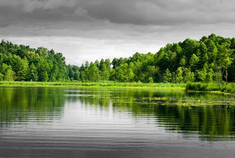 FototapetaFotografia czarno-biała z zielonym akcentem - Drzewa nad jeziorem