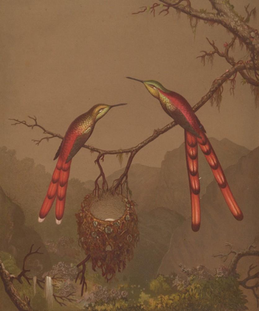 Fototapeta Reprodukcje na ścianę Martin Johnson Heade - Brazilian Hummingbirds I