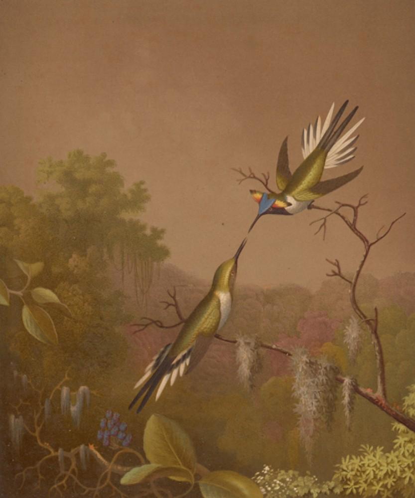 Fototapeta Reprodukcje na ścianę Martin Johnson Heade - Brazilian Hummingbirds III