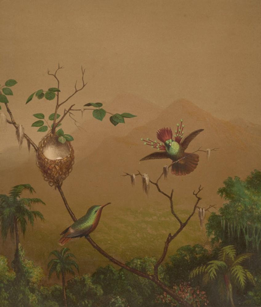 Fototapeta Reprodukcje na ścianę Martin Johnson Heade - Brazilian Hummingbirds IV