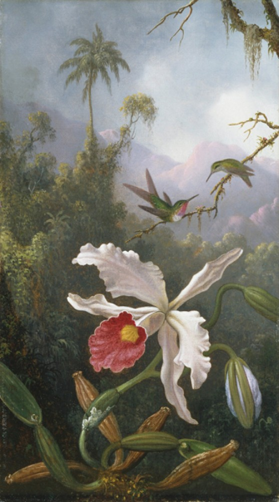 Fototapeta Reprodukcje na ścianę Martin Johnson Heade - Two Hummingbirds Above a White Orchid