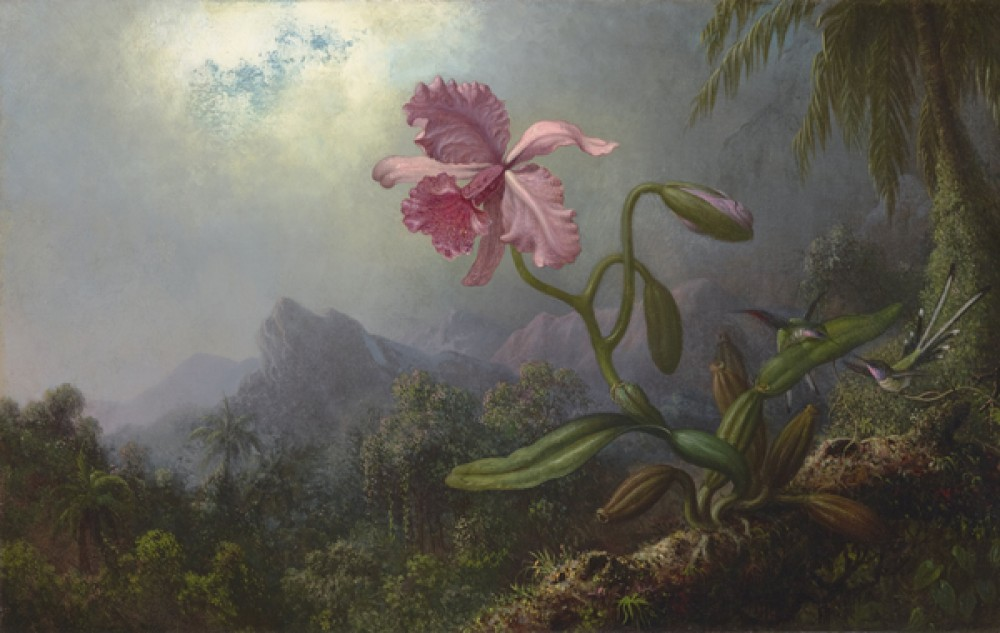 Fototapeta Reprodukcje na ścianę Martin Johnson Heade - Two Hummingbirds with an Orchid