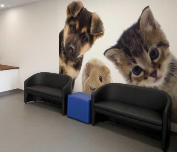Fototapeta do gabinetu weterynaryjnego: Piesek, kotek i świnka morska