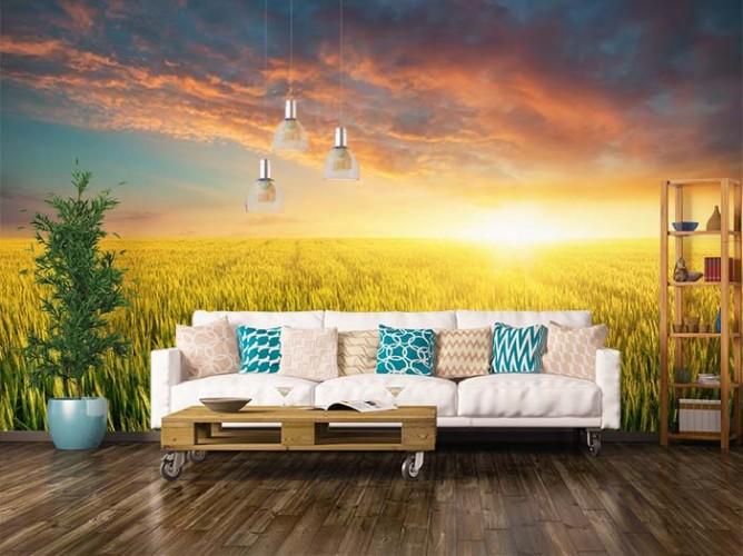 Fototapeta do salonu z motywem zachodu słońca nad polem zboża