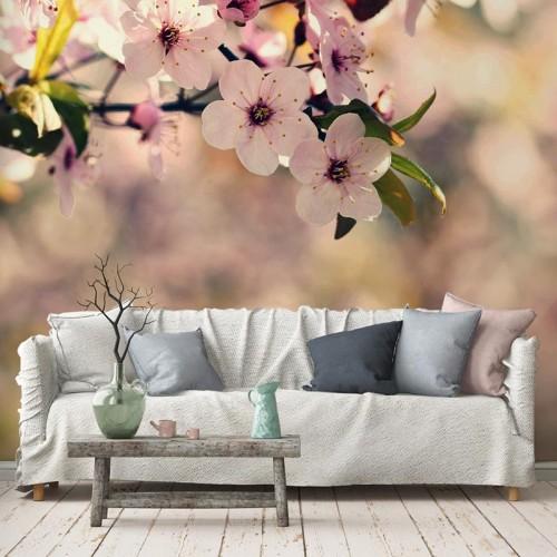 Fototapeta kwitnące kwiaty wiśni, wiosna