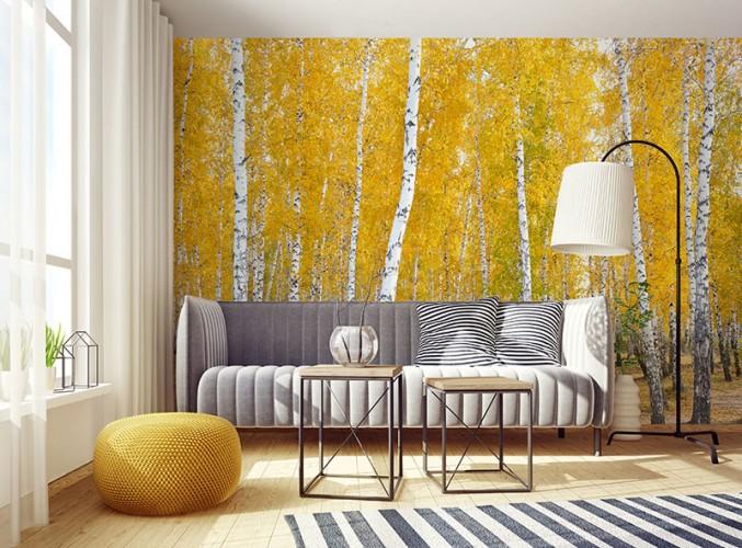 Fototapeta z jesiennym lasem brzozowym.