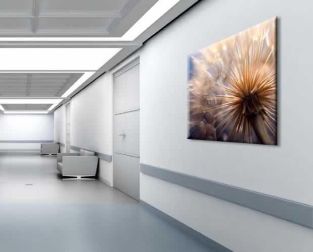 Obraz na płótnie do szpitala z motywem pięknego dmuchawca