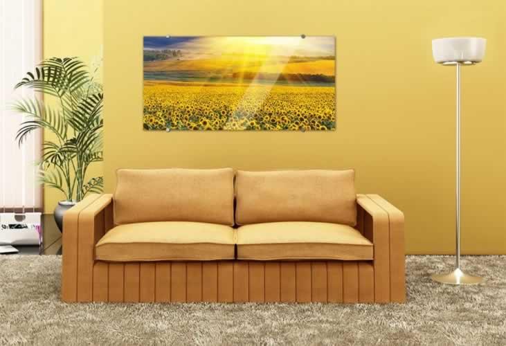 Obraz na szkle Pole słoneczników
