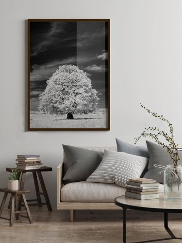 Plakat czarno-biały krajobraz z drzewem