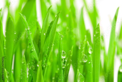 Obraz na Szkle fresh grass with dew drops