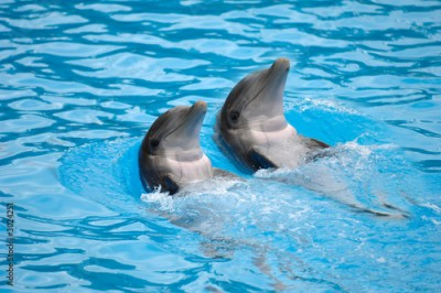 Fototapeta dolephin race