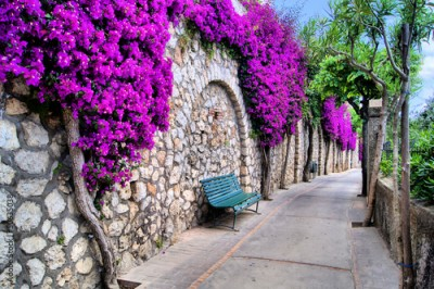 Panel Szklany Vibrant flower draped pathway in Capri, Italy