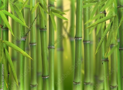 Fototapeta Bamboo sprouts forest
