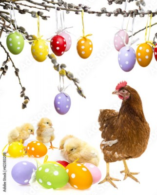 Fototapeta easter eggs and chickens with hen