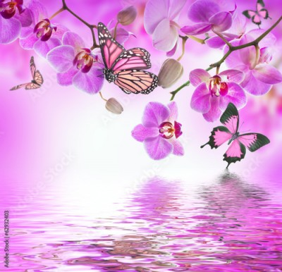 Fototapeta Floral background of tropical orchids and  butterfly