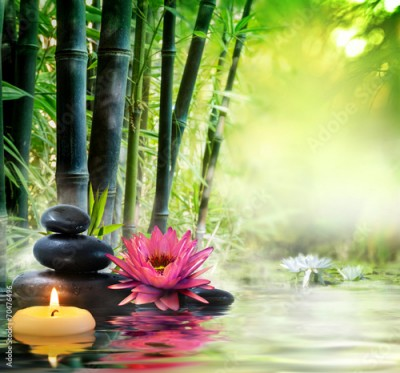 Fototapeta massage in nature - lily, stones, bamboo - zen concept