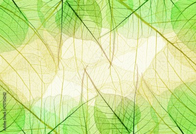 Obraz Background of Greenand Yellow Leaves