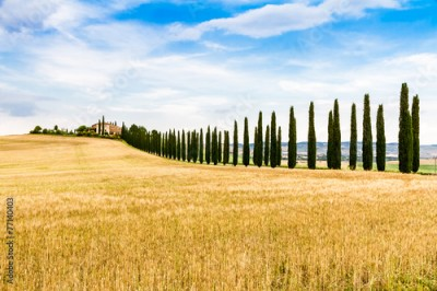 Fototapeta country road flanked with cypresses in Tuscany, Italy