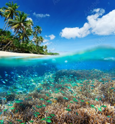 Fototapeta Coral reef in tropical sea.
