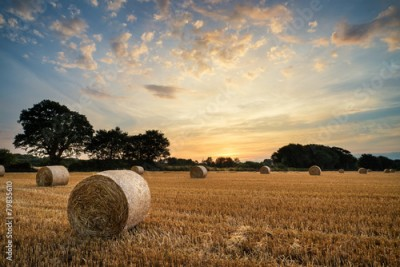 Fototapeta Rural landscape image of Summer sunset over field of hay bales
