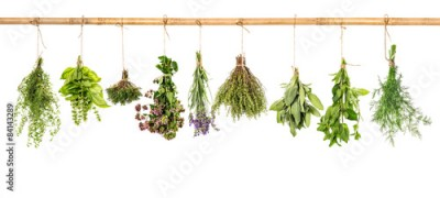 Obraz na Szkle Collection of fresh herbs. Basil, sage, dill, thyme, mint, laven