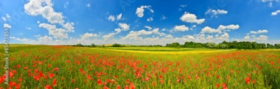 Obraz na Szkle Panorama of poppy field in summer countryside