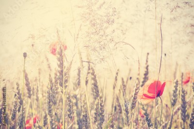 Naklejka Retro vintage filtered wild meadow with poppy flowers at sunrise