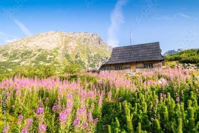 Fototapeta Wooden hut on flowery meadow in Tatra Mountains