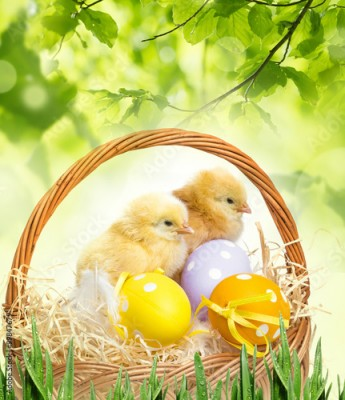 Fototapeta a basket with easter eggs and chickens