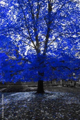 Obraz Blue Tree in Black and White Landscape