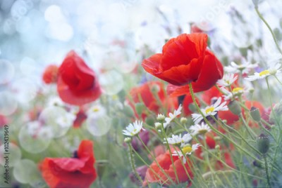 Panel Szklany Field of red  poppy flowers