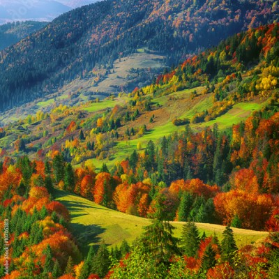Obraz na Plexi the mountain autumn landscape with colorful forest