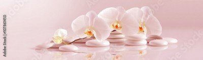 Fototapeta White Orchid with white pebbles on the pale pink background. Panoramic image
