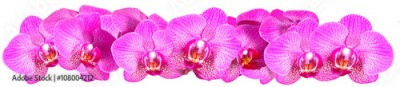 Fototapeta Pink Orchid on white background panorama
