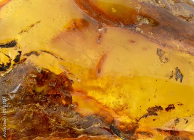 Fototapeta Baltic amber, resin segments,background or texture