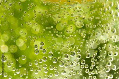 Fototapeta green abstract background with water drops